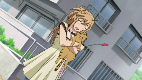 Yes, the characters in Nyankoi! love cats.